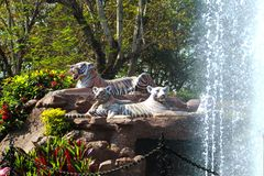 Статуя тигра с водой брызг стоковое изображение