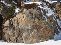 Старый утес покрытый с мхом и снегом стоковая фотография rf
