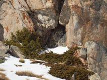 Старый утес покрытый с мхом и снегом стоковые фото