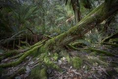 Старый распадаться входит в систему пол леса стоковое изображение rf