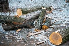 стволы дерева отрезанные и брошенные к земле Промышленность environment стоковое изображение rf
