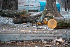 стволы дерева отрезанные и брошенные к земле Промышленность environment стоковое фото rf