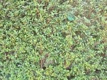 Стены покрытые с лозами стоковое фото