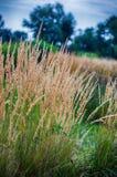 Стержень зеленой травы растя outdoors стоковое фото
