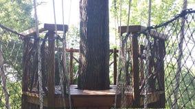 Стойка дерева в местном парке стоковое изображение rf