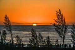 Сценарный заход солнца с красивой высокорослой травой во фронте и людьми в пристани стоковая фотография rf