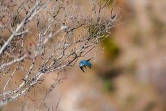 Сцена с голубой синицей на утре весны стоковое изображение rf