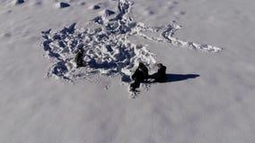 Счастливая молодая семья имеет потеху играя в снеге Они весело падают в снег Семья счастлива совместно сток-видео