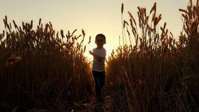 Счастливый смеясь мальчик бежит через пшеничное поле в лучах солнца на заходе солнца Ферма и сбор Soly для встречи сток-видео