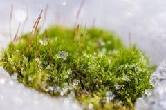 Схватки природы через снег стоковое изображение rf