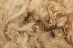 Срезанная ватка шерстей стоковые изображения rf