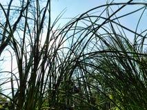 Среди высокорослых трав стоковые фото