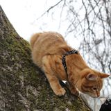 Ð¡at curiosity. Capturing the curiosity of Pets on a walk royalty free stock photography