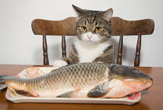Сat and the fish Stock Photos