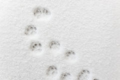 Ð¡at footprints in the snow. Close up photo royalty free stock photo