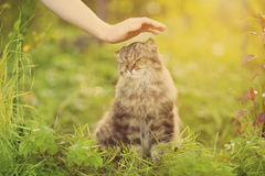 Ð¡at and hand on nature background. Allergies to animals, cat fur. Caring for Pets and stray animals stock image
