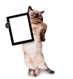 Сat holding a blank tablet Royalty Free Stock Photography