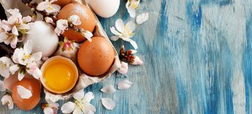 Сhicken eggs and almond flowers. On  a blue wooden background Royalty Free Stock Photos
