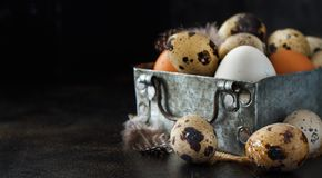 Сhicken and quail eggs in a box. On a dark background Stock Photos