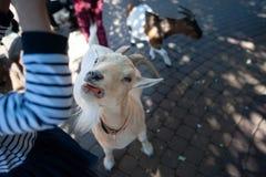 Сhildren feed goats stock images