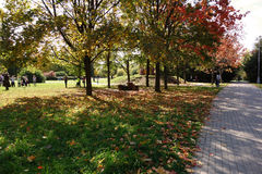 Сhildren play a municipal park вy a sunny autumn day Royalty Free Stock Image