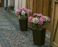 Ð¡ity flowers royalty free stock image