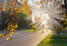 Ð¡ity street early in the morning. Ð¡ity street in early morning autumn. Rays of the sun through the branches of linden with yellow leaves royalty free stock photography