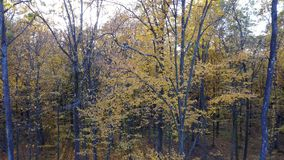 Сlose-up view of the trees in forest with yellow foliage stock footage