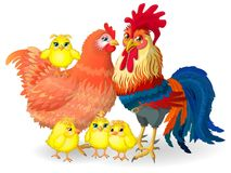 Сock family - сock, hen and chickens. Vector Illustration. Stock Photos