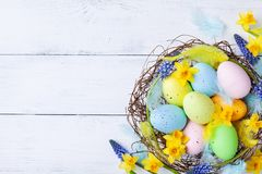 Ð¡olorful Easter eggs in nest, feather and spring flowers on white table top view. Holiday card or banner.  royalty free stock photography
