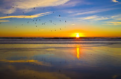 сolourful sunset sky and stock of seagulls Royalty Free Stock Photos