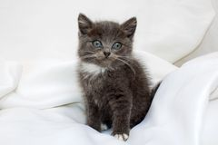 Сute kitten Royalty Free Stock Photography