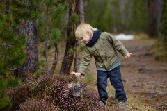 Ð¡ute little boy examines a Heather Bush in the Swiss National Park in the spring. Active family time outdoors. Hiking with young children. Study of nature royalty free stock photo