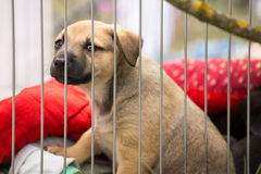 Ð¡ute little sad brown puppy in a cage royalty free stock photography