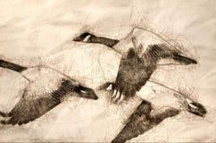 Эскиз гусынь Канады летая через древесины осени иллюстрация вектора