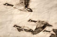 Эскиз гусынь Канады летая через древесины осени бесплатная иллюстрация