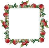 Яблоки квадратного венка красные выходят орнамент ветвей иллюстрация штока