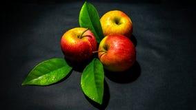 Яблоки с листвой стоковые фотографии rf