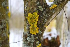 It should be understood that the lichen is not mold, though, and belong to the fungal Kingdom, but I live much like plants as exis. ЯндексПереводчик