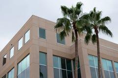 Угол современного офисного здания с подкрашиванными окнами и 2 деревьями стоковые изображения