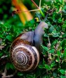 Улитка между зеленый взбираться листьев стоковое изображение