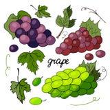 Установите различных разнообразий виноградин и листьев виноградины бесплатная иллюстрация