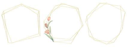 Установите рамок тюльпанов акварели Нарисовано вручную Идеал для логотипа, приглашений свадьбы, карт иллюстрация вектора