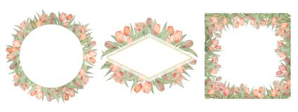 Установите рамок тюльпанов акварели Нарисовано вручную Идеал для логотипа, приглашений свадьбы, карт бесплатная иллюстрация
