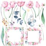Установите руки покрасил флористические иллюстрации акварели и ботанические рамки с тюльпанами, эвкалиптом, полевыми цветками, ра иллюстрация штока