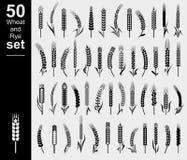 Уши комплекта пшеницы и рож вектор бесплатная иллюстрация