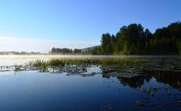 Утренний туман. Quiet and calm mist rises over the water`s edge Stock Photos
