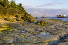 Утро на острове Занзибара побережья океана стоковое изображение