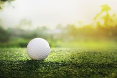 Шар для игры в гольф на зеленой лужайке в красивом поле для гольфа стоковая фотография rf