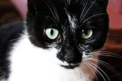 ¾ шка/Cat de КРImagen de archivo libre de regalías